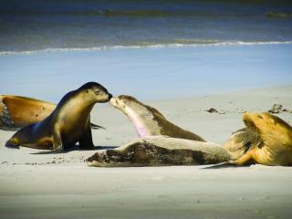 Kangaroo Island Road to Recovery Tour - Seals