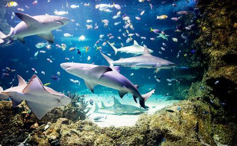 Sea Life Sydney Aquarium One Of Sydney S Top Attractions