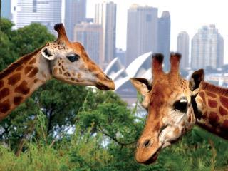 Sydney Taronga Zoo