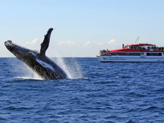 Whale Watching Sydney Harbour