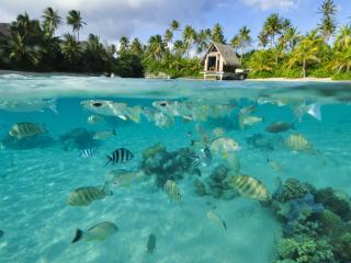 Fish in the Lagoon