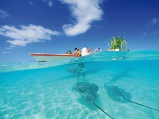 Moorea Pearl Resort - Swim with the Stingrays