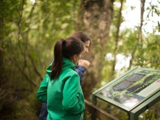 Rainforest Walk