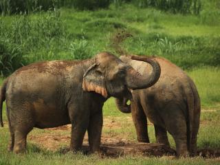 Ethical Elephant Experience at Elephant Hills Luxury Tented Camp Khao Sok National Park Thailand