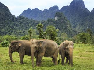 Ethical Elephant Experience at Elephant Hills Luxury Tented Camp Khao Sok National Park Thailand