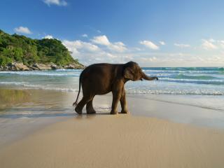 Baby elephant on a Beach in Phuket