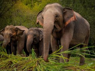 Elephant Sanctuary Chiang Mai 1