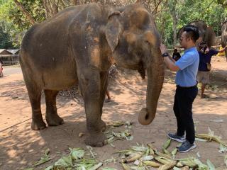 Elephant Sanctuary Chiang Mai 3