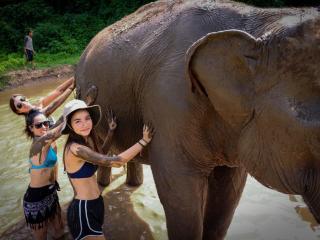 Elephant Sanctuary Chiang Mai 5