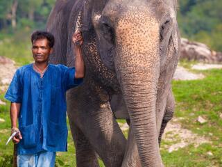 Elephant Trekking Mini Safari