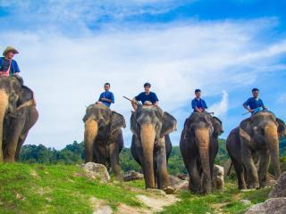 Elephant Trekking Mini Safari 30 Minutes