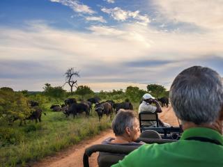MW_Kruger Buffalo
