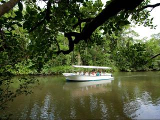 Daintree Walkabout Tour