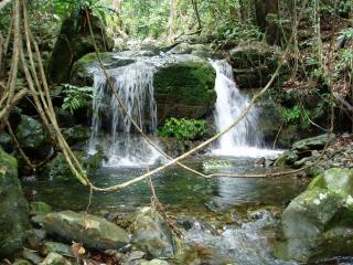 Daintree Cape Tribulation Tour