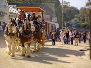Ballarat Horses