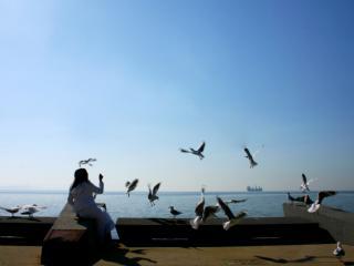 Feeding the Birds Along the Geelong Foreshore