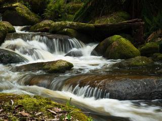 Toorongo River, Gippsland Victoria