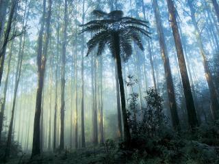 Dandenong Rainforest