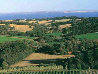 Morington Peninsula Wine Tour
