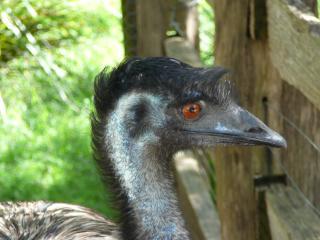 Wine & Wildlife Tour - Healesville Sanctuary